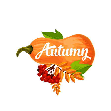 aspen tree: Autumn icon or poster for September seasonal holiday design. Vector pumpkin and autumn berry harvest with leaf fall or foliage of maple, oak or rowan and elm tree with rowanberry bunch