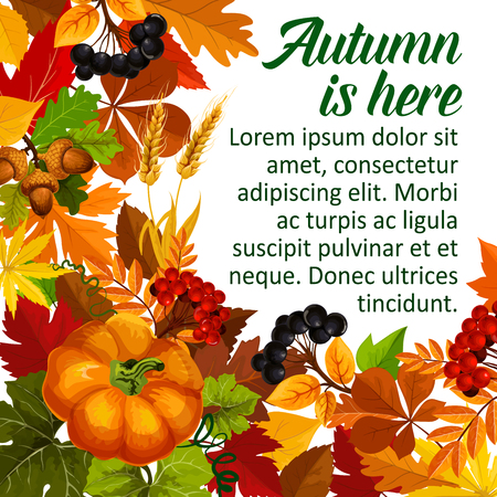 Autumn pumpkin and fall season leaf poster. Autumn foliage of maple tree, orange pumpkin vegetable, yellow leaves, acorn and rowan berry branch, ripe wheat banner template for Thanksgiving Day design Imagens - 83688323