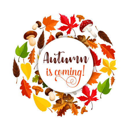 Autumn vector poster of maple leaf fall Çizim