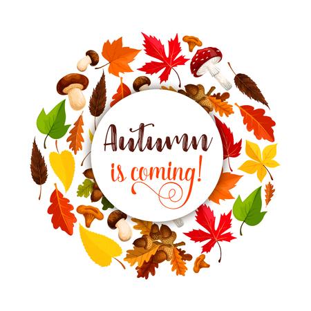 Autumn vector poster of maple leaf fall Ilustração