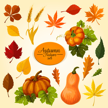 Autumn vegetable and fallen leaf icon set. Fall season harvest pumpkin veggies, maple, oak and chestnut leaf, wheat ears, orange and red foliage of birch, elm for autumn nature themes design