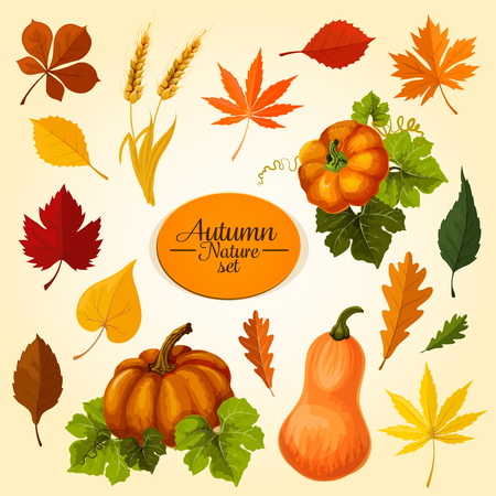Autumn vegetable and fallen leaf icon set. Fall season harvest pumpkin veggies, maple, oak and chestnut leaf, wheat ears, orange and red foliage of birch, elm for autumn nature themes design Imagens - 83854051