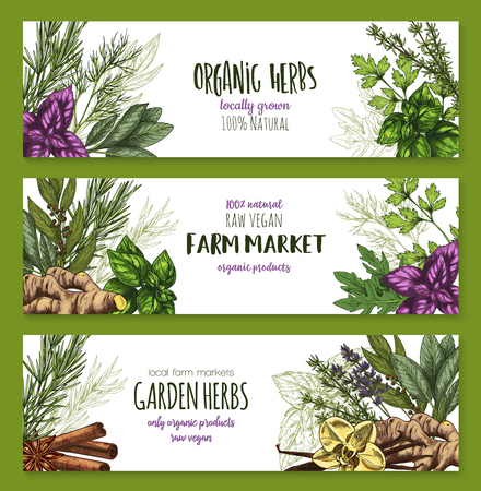 Organic herb and spices farm market banner set