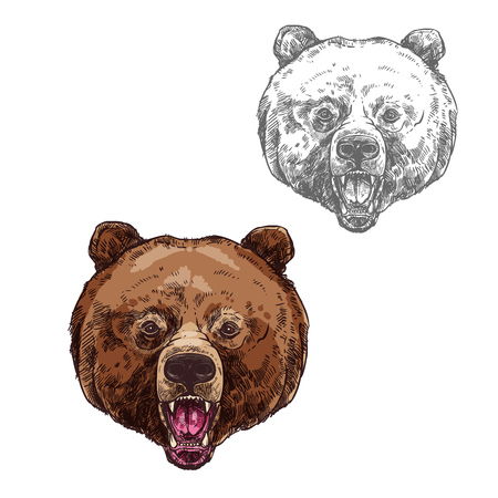 Bear isolated sketch with head of wild grizzly