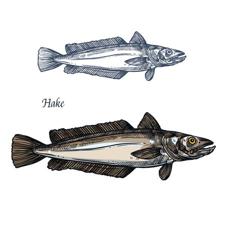 Merluza de pescado, boceto aislado de mariscos para el diseño de alimentos Foto de archivo - 83982311