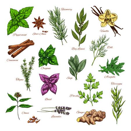 Culinaire kruiden- en specerijenschets voor voedselontwerp Stock Illustratie