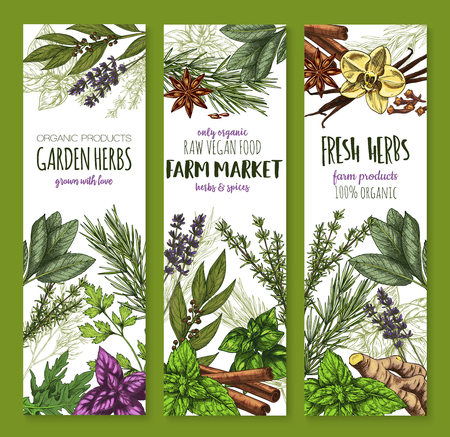 Herb and spice, fresh garden food sketch banner