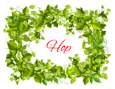 Hops plant green branches with leaf and cone arranged into frame.
