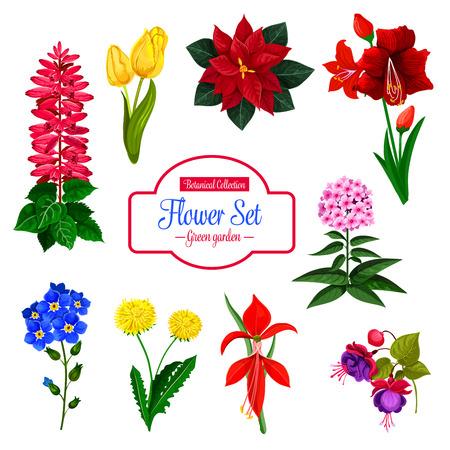 꽃, 정원 및 집 꽃 식물 격리 된 아이콘을 설정합니다. 일러스트