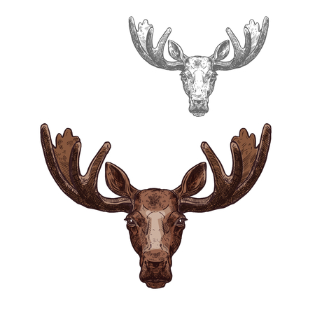Moose or elk wild animal head isolated sketch 向量圖像