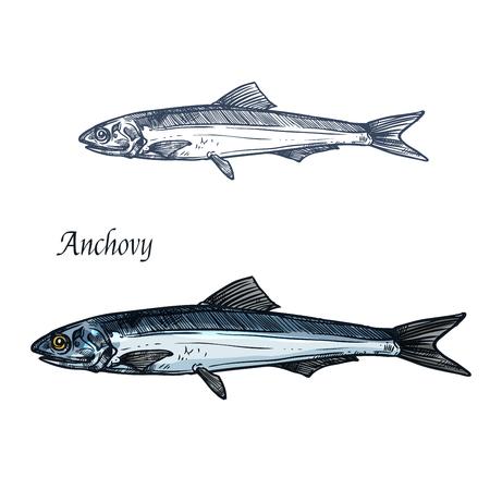 Lokalisierte Skizze der Sardellenfische für Meeresfrüchtedesign Standard-Bild - 84011129