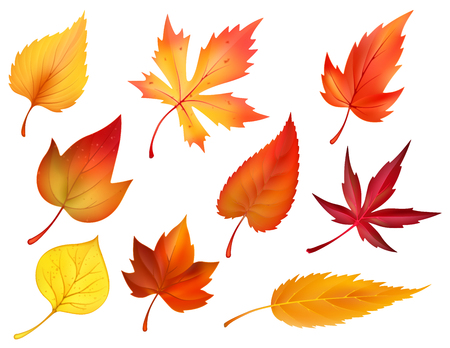 Autumn foliage of fall falling leaves vector icons Çizim