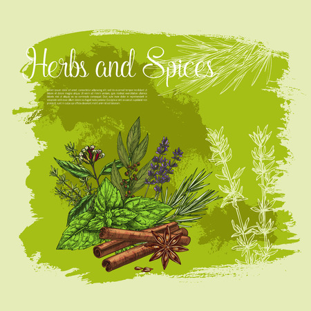 Poster of thyme spice, basil, rosemary herb Illustration