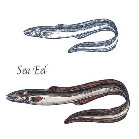 바다 장어 물고기 벡터 격리 된 스케치 아이콘.