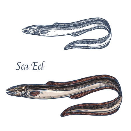 Sea eel fish vector isolated sketch icon.