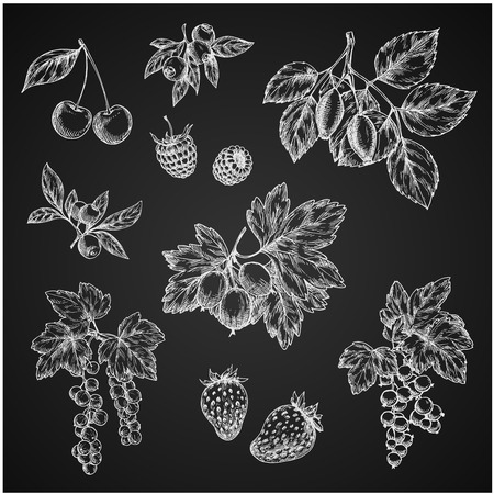 Vectro chalk sketch icons of berries fruits