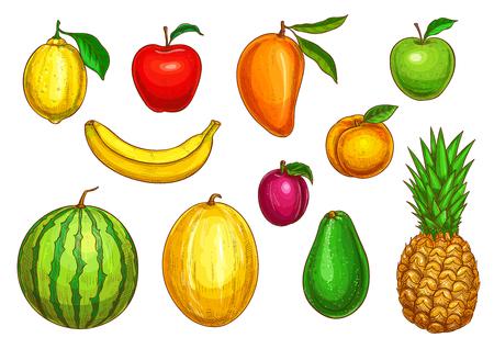 Conjunto de iconos aislados de frutas. Vector exótico piña, mango o papaya y jardín de la granja de manzana, sandía o melón y aguacate, cosecha de albaricoque o pera y limón o naranja cítricos y ciruela Foto de archivo - 84922319