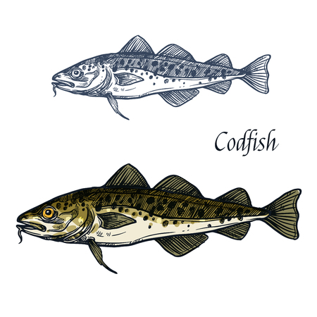 Cod fish vector isolated sketch icon