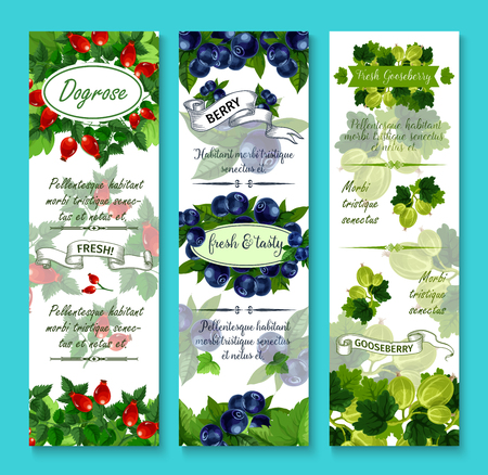 Berries banners for berry shop or farmer market. Vector set of dogrose berry, gooseberry or strawberry and cranberry harvest, juicy black or red currant and garden raspberry, blueberry