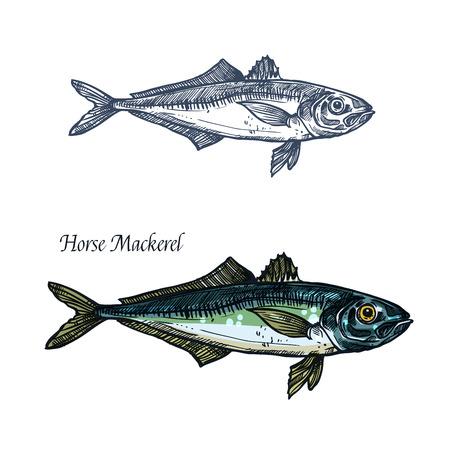 鯵魚ベクトル スケッチ アイコン。孤立した海または海マサバやサバの種釣りクラブや水産市場、動物、魚介類や魚料理のレストランの海洋動物動物