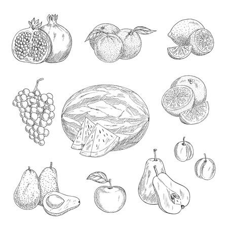Frutas bosquejar iconos. Conjunto aislado de vector de manzana, granate o granada y pera, cítricos de naranja o lima y uva, sandía y exótica cosecha tropical de aguacate, melocotón o albaricoque y ciruelo Foto de archivo - 84922648
