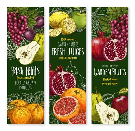 Banners de bosquejo del vector de frutas tropicales exóticas Foto de archivo - 84948468