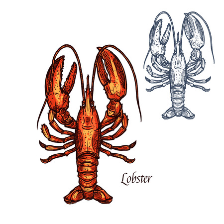 Lobster seafood vector isolated sketch icon