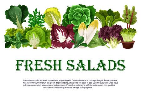 신선한 샐러드 잎이 많은 채소의 벡터 포스터