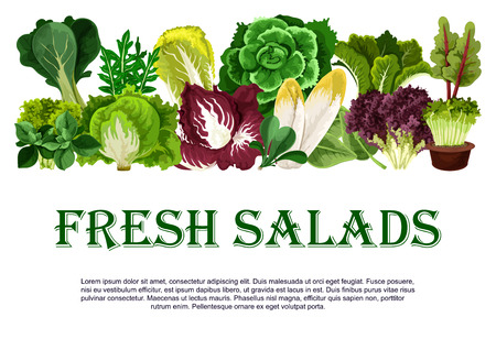 Vector poster of fresh salads leafy vegetables
