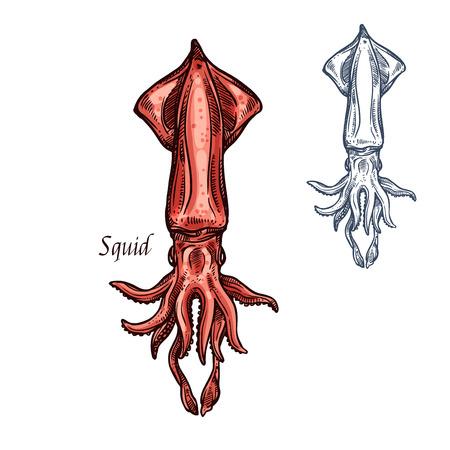 Icono de calamar bosquejo mariscos vector aislado Foto de archivo - 85405482