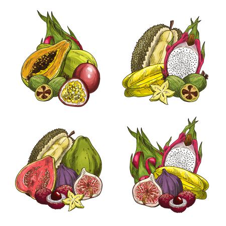 Vector exotic fresh tropical fruits
