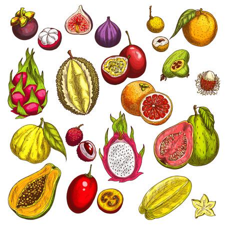 熱帯のエキゾチックなフルーツのベクター スケッチ アイコン