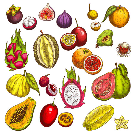 Vector sketch icons of tropical exotic fruits Иллюстрация