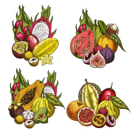 Bunte Skizzen der exotischen Frucht und der tropischen Beere. Papaya, Orange und Durian, Carambola, Passionsfrucht, Feijoa und Drachenfrucht, Guave, Litschi und Feige, Mangostan, Grapefruit, Longan und Rambutan Standard-Bild - 85567641