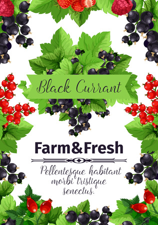 Berry and fruit banner of strawberry, black and red currant, raspberry, briar. Fresh farm berries cartoon poster, framed by fruit branches with green leaves for farm market label, food themes design Zdjęcie Seryjne - 85567819