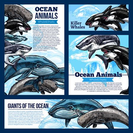Whale and shark, giant ocean animal banners. Whale, reef shark, killer whale or orca and hammerhead shark sketch poster, marine animal flyer for zoo, oceanarium, marine mammal park design Illustration