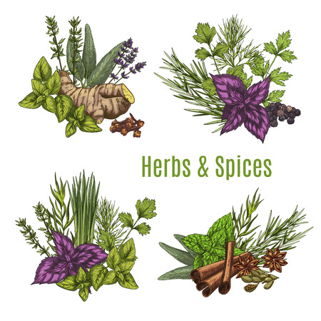 Fresh herb and spice sketches. 向量圖像
