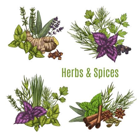Schizzi di erbe e spezie fresche. Archivio Fotografico - 85576234