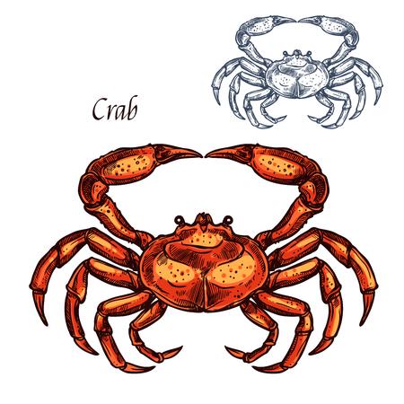 カニ動物分離スケッチ。海の甲殻類、海のカニやロブスターの看板赤い殻と爪。シーフードレストランや水中野生動物のデザインのための海産貝の