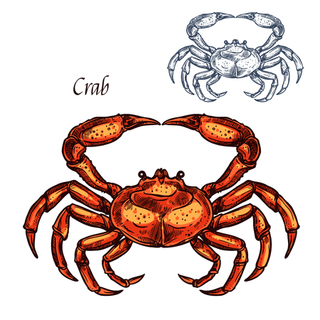 Crab animal isolated sketch. Ocean crustacean, sea crab or lobster sign with red shell and claw. Marine shellfish symbol for seafood restaurant or underwater wildlife design