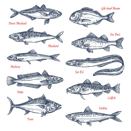 Vector sketch icons of sea and ocean fish Ilustração