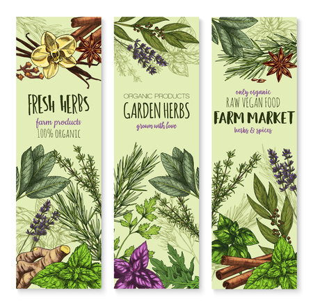 Herbs and spices vector banners. Sketch set of cinnamon, basil or oregano leaf for salad dressing, onion leek and spicy rosemary, aroma peppermint or lavender and lemongrass with tarragon and arugula. Çizim