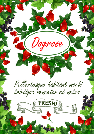 Dogrose berries or briar fruits poster for fruit shop or farm market.