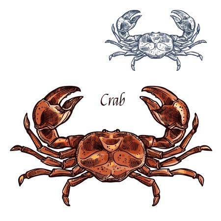 カニやロブスターのスケッチ。釣りクラブや水産市場、シーフード レストランの看板の爪のある海洋動植物種動物の海または海ザリガニ甲殻類のベ  イラスト・ベクター素材