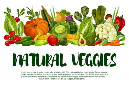 Natuurlijk groentenposter van verse groenten. Vector boerderij oogst courgette, wortel of pompoen en kool, tuin aubergine, radijs of tomaat en komkommer, vegetarische bloemkool of avocado en peper