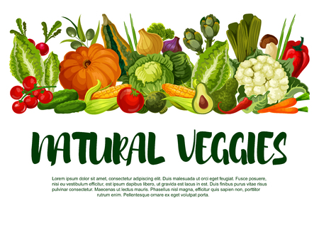 Natural veggies poster of fresh vegetables. Vector farm harvest zucchini, carrot or pumpkin and cabbage, garden eggplant, radish or tomato and cucumber, vegetarian cauliflower or avocado and pepper