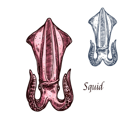 Squid vector isolated sketch seafood icon
