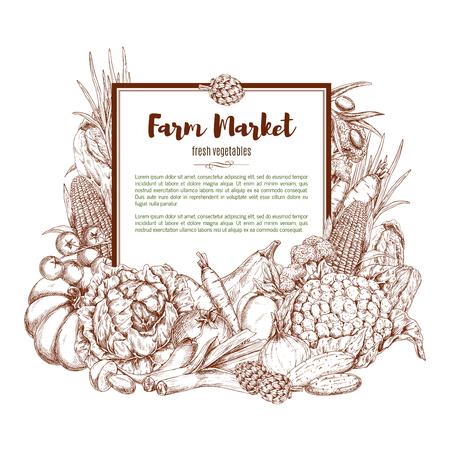 Vector sketch poster of farm vegetables Illustration
