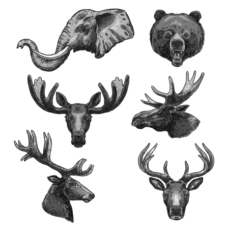Vector sketch icons of wild animals heads