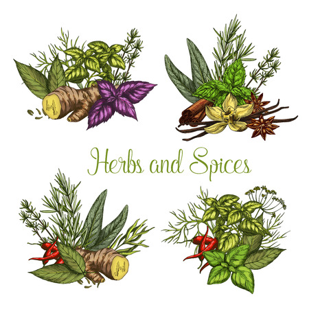 Vector spices and herbs seasonings sketch